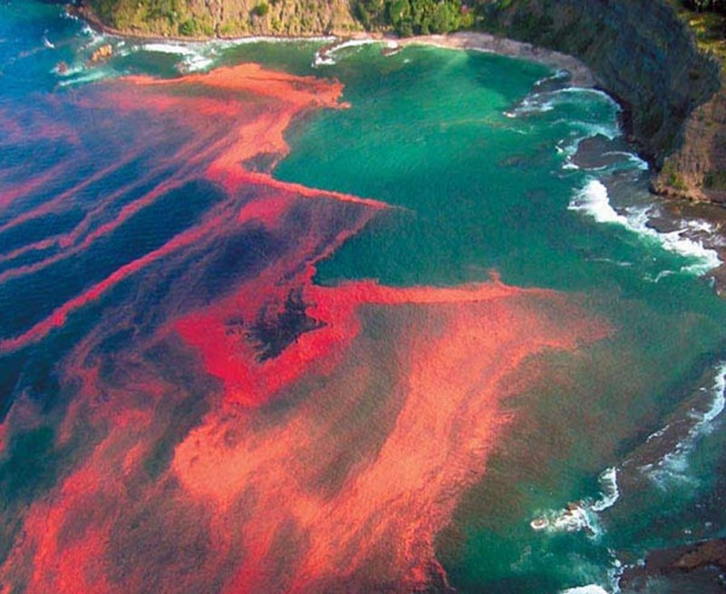 Red-algal-bloom-at-Leigh-near-Cape-Rodney