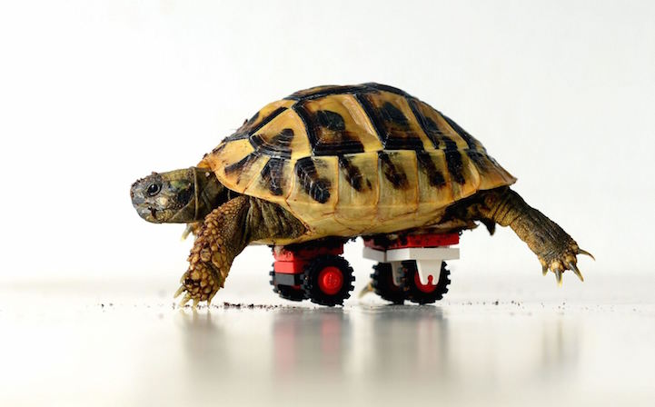 Disabled Tortoise_Lego Wheels