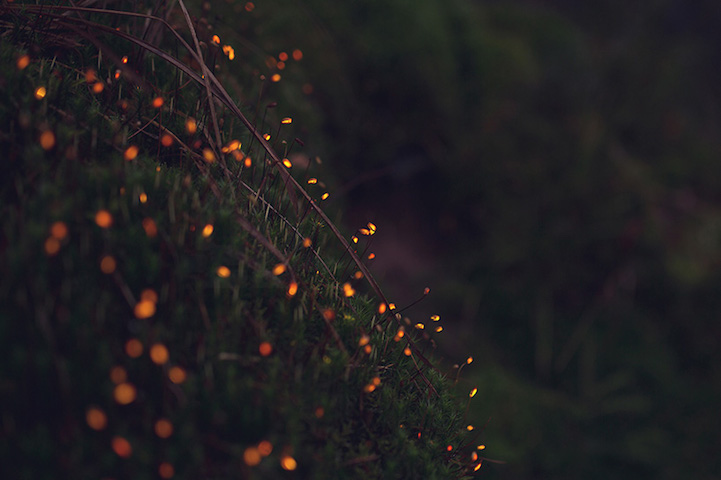 Bioluminescent_Forest_4
