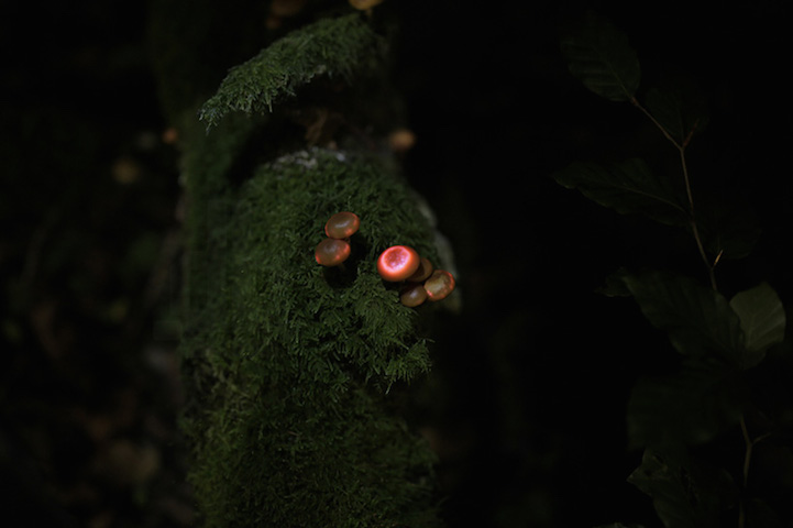 Image result for bioluminescent forest