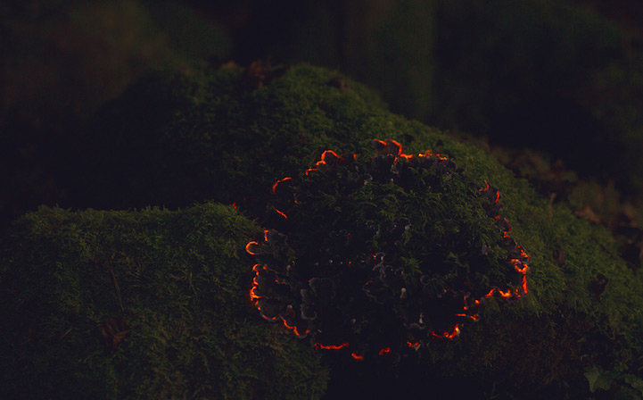 Bioluminescent_Forest_6
