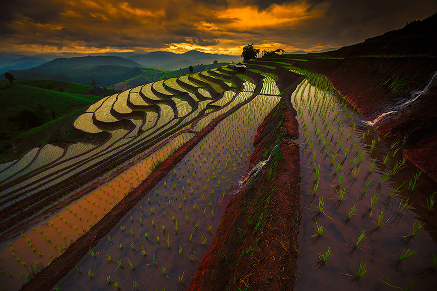 Paddy_Fields_Art_ Asia_1