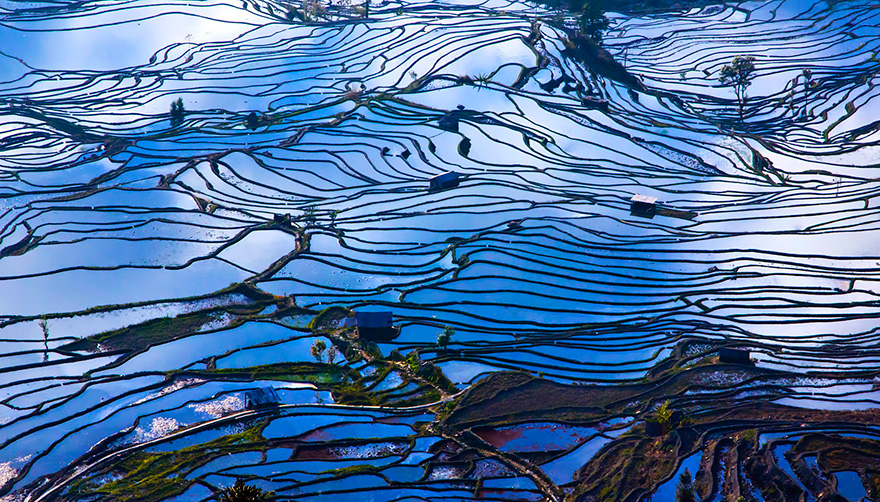 Paddy_Fields_Art_ Asia_10