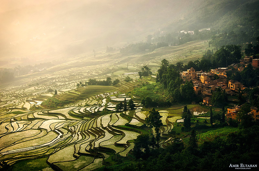 Paddy_Fields_Art_ Asia_11