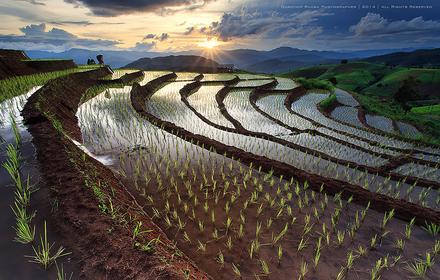 Paddy_Fields_Art_ Asia_13