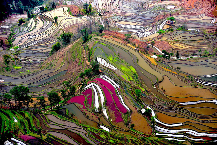 Paddy_Fields_Art_ Asia_5