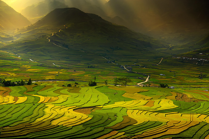 Paddy_Fields_Art_ Asia_6