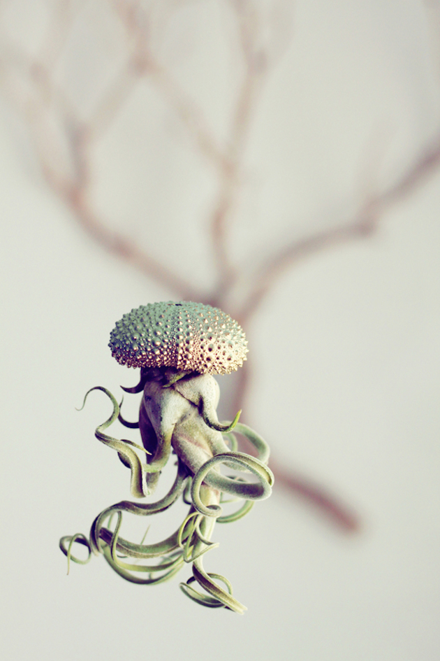 Jellyfish-Air-Plants-1