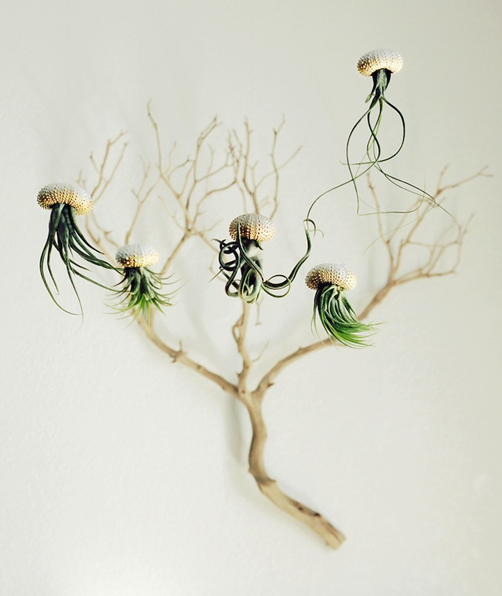 Jellyfish-Air-Plants-10