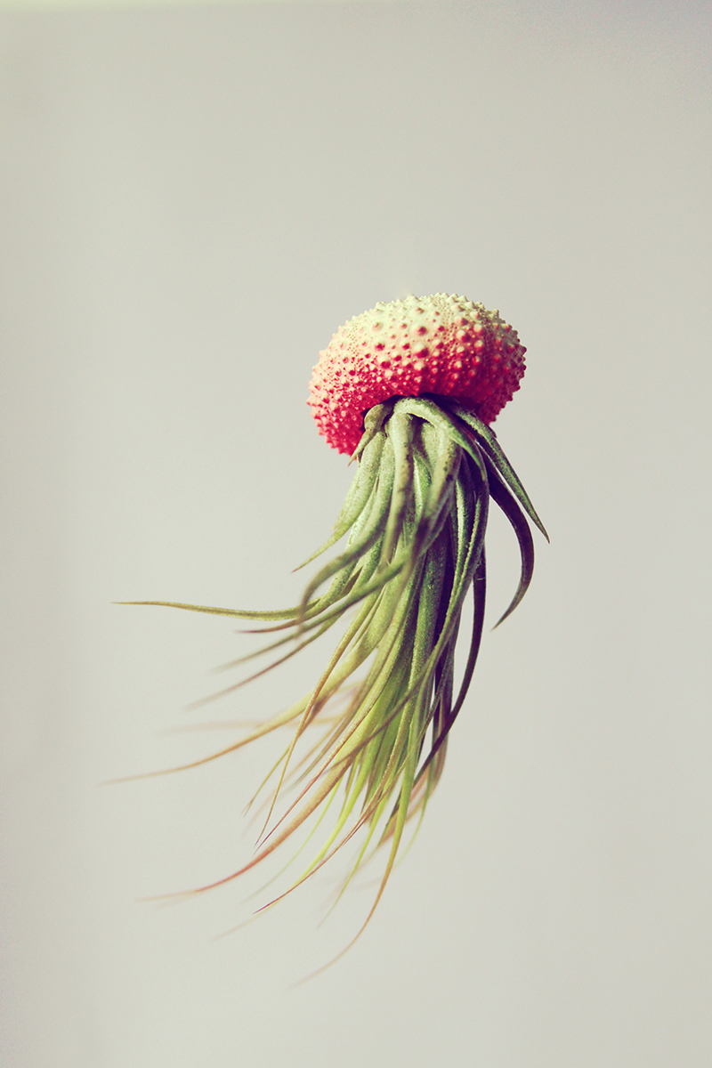 Jellyfish-Air-Plants-7