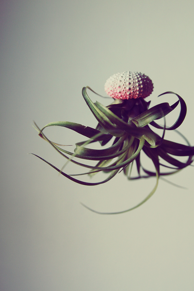 Jellyfish-Air-Plants-8