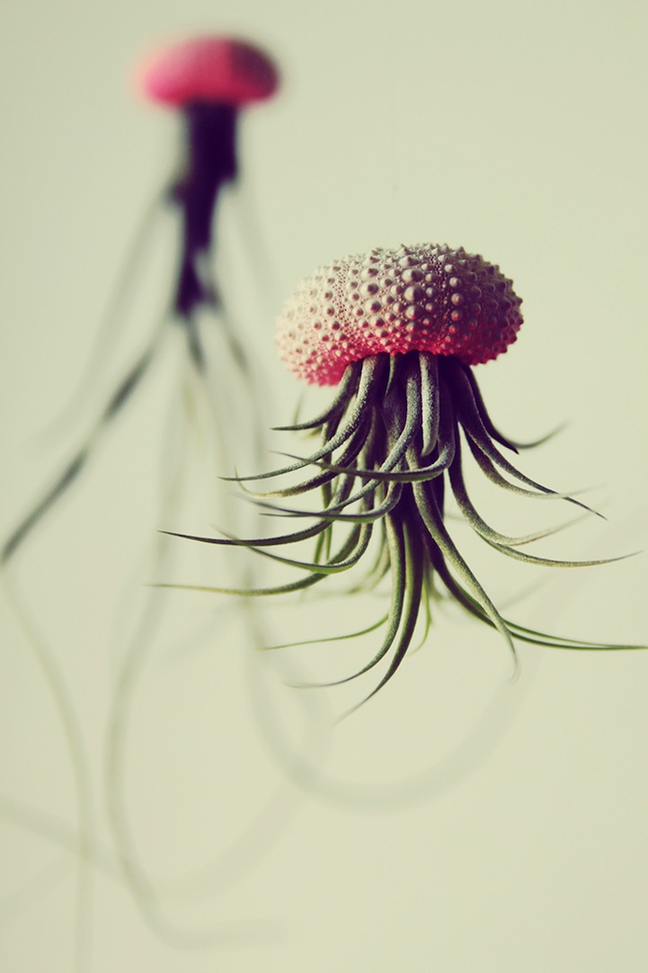 Jellyfish-Air-Plants-9