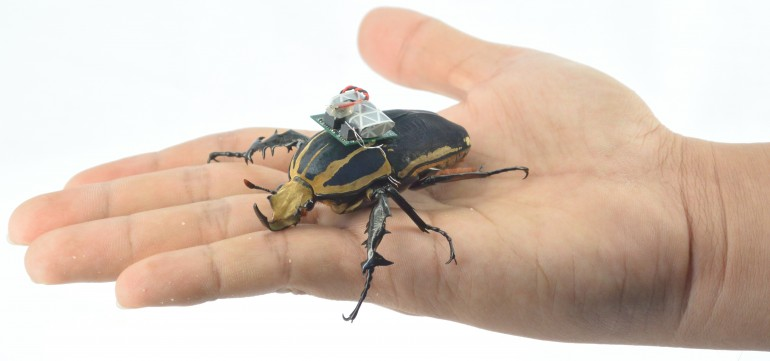Scientists_Remotely_Control_Beetle_Flight_2