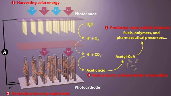 Artificial_photosynthesis_reduce CO2_usable_products_3