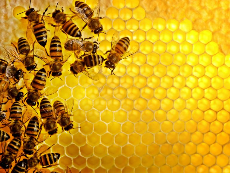 Police Could Soon Use Honeybees To Curb Drug Trafficking-4
