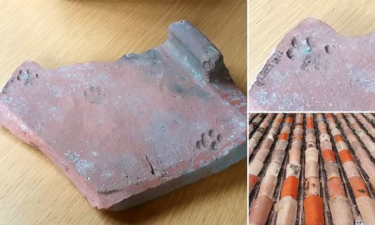 2000-Year-Old Cat Paw Prints On Roman Roof Tile-3