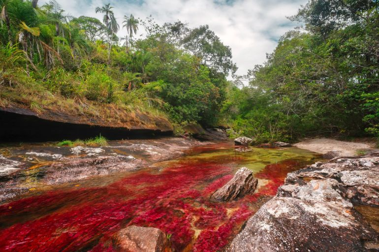 Cano-Cristales_River_Colombia_Amazing_Places_To_Visit_Fantasy_1