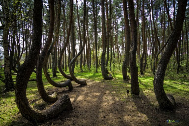 Crooked_forest_Poland_Amazing_Places_To_Visit_Fantasy_1