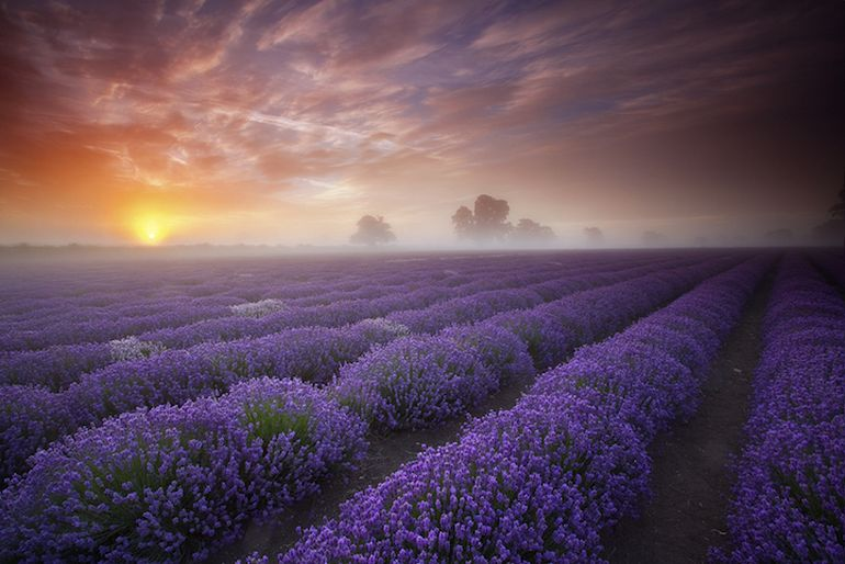 Mesmerising Beauty of Lavender Fields in Full Bloom-9