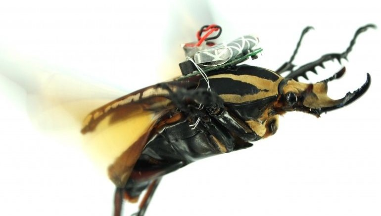 advanced_technology_science_fiction_cyborg_insect