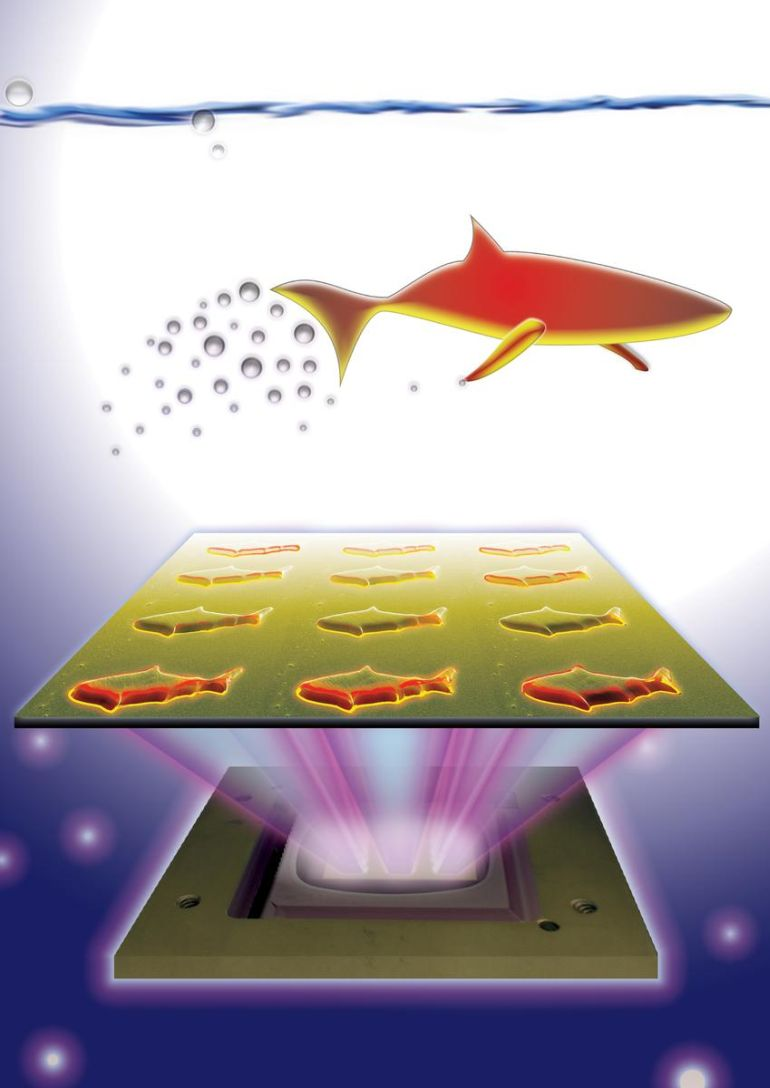 3D-Printed Microfish Robots Double As Efficient Toxin Sensors-1