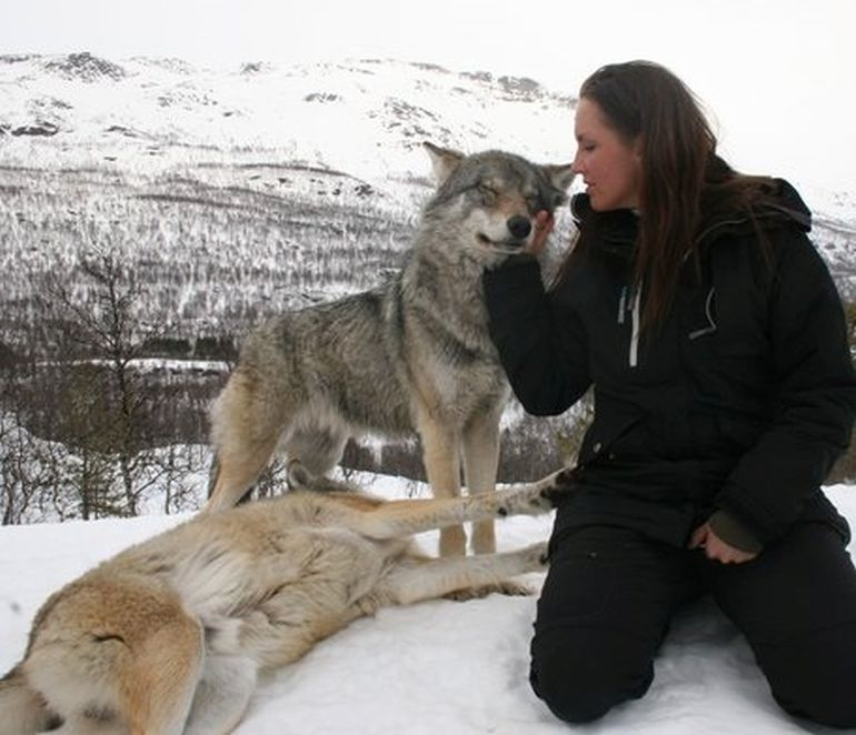 Norway's Polar Park Allows Guests To Camp Among Wolves-4