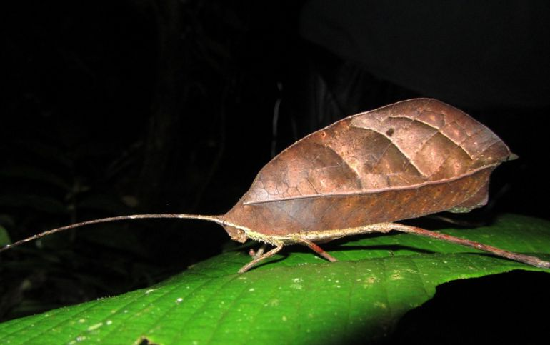 animal-camouflage_katydid_astonishing_2