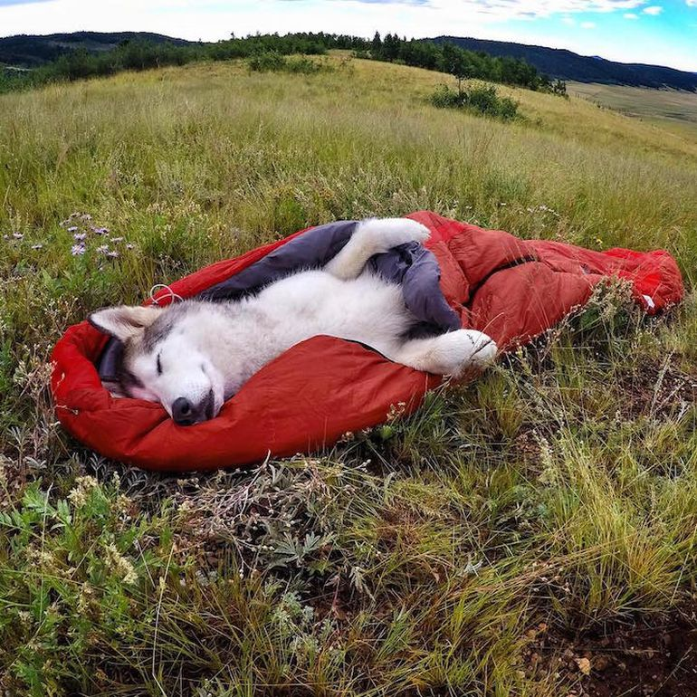 Meet Loki, The Wolfdog With 392,000 Instagram Followers-11