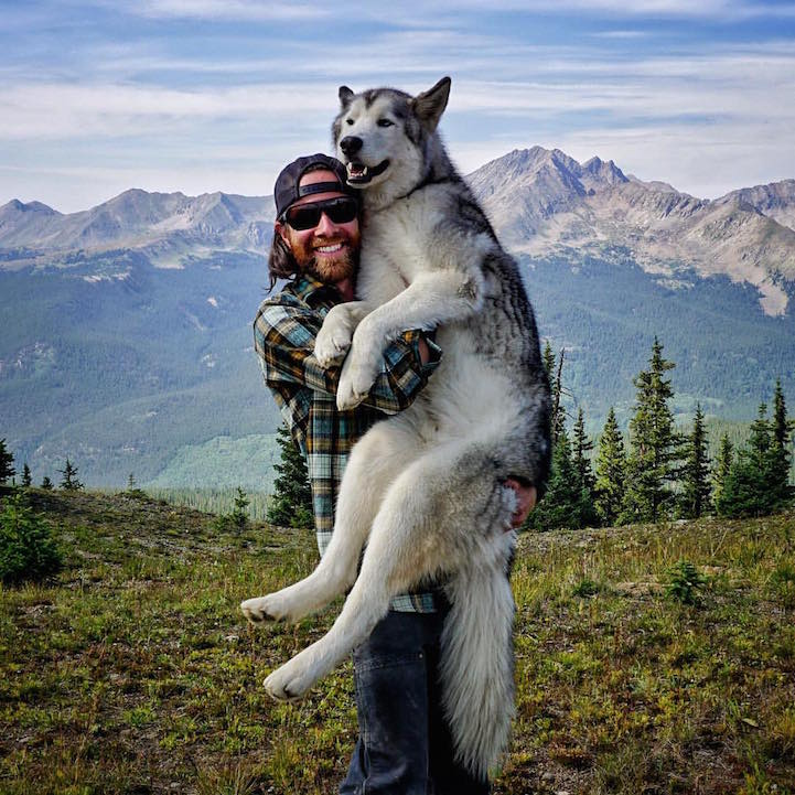 Meet Loki, The Wolfdog With 392,000 Instagram Followers-3