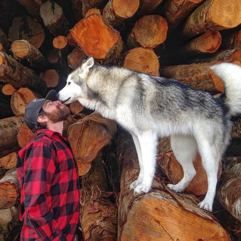 Meet Loki, The Wolfdog With 392,000 Instagram Followers-5