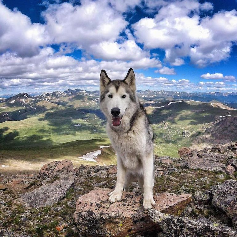 Meet Loki, The Wolfdog With 392,000 Instagram Followers-6
