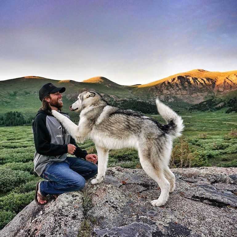 Meet Loki, The Wolfdog With 392,000 Instagram Followers-9