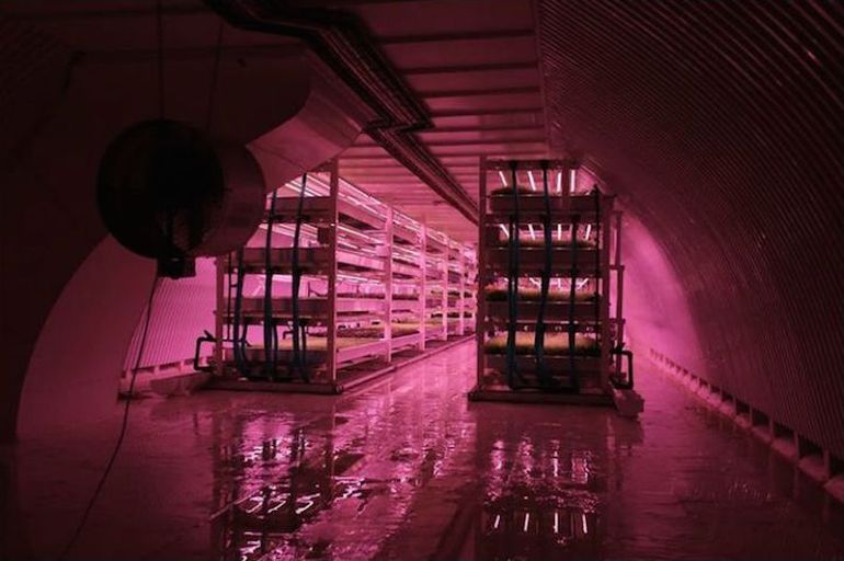 WWII Bomb Shelter Becomes London's First Underground Farm-3