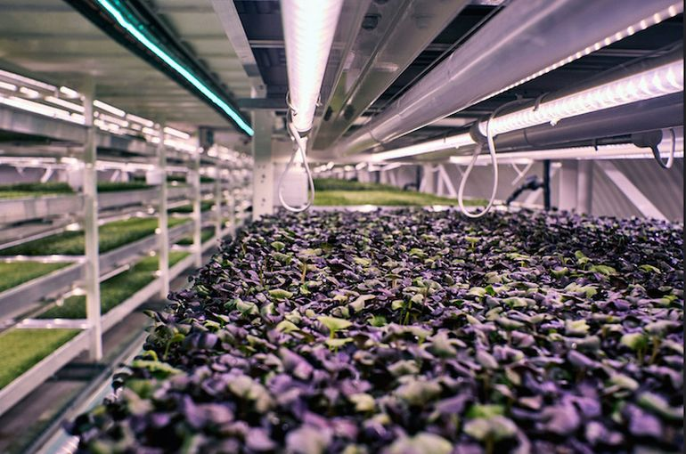 WWII Bomb Shelter Becomes London's First Underground Farm-5