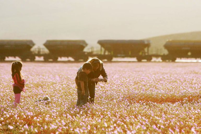 Atacama Desert_Flowers_Bloom_Climate_Change_2