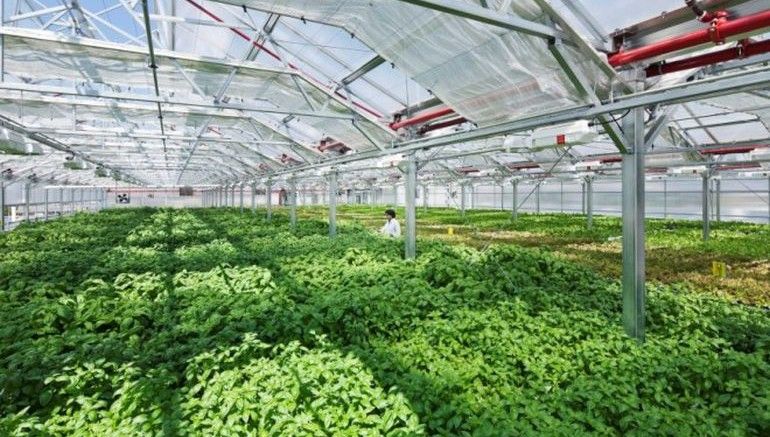 chicago gets the world 39 s largest rooftop urban farm. Black Bedroom Furniture Sets. Home Design Ideas