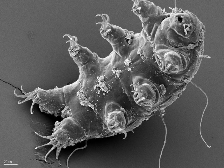 Frozen Tardigrade, Revived After 30 Years, Gives Birth To 14 Babies-3