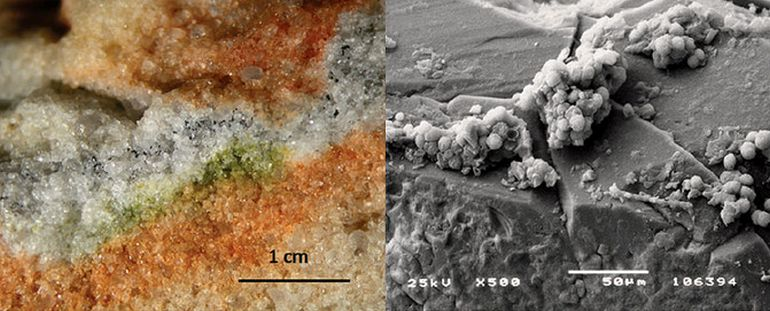 Tiny Antarctic Fungi Survive Extreme Martian Conditions In Outer Space-2