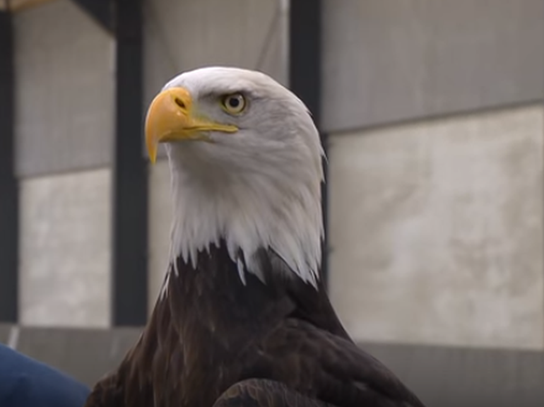 Dutch Police Are Planning to Use Eagles To Hunt Down Intrusive drones-2