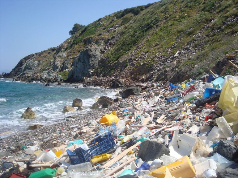 Japanese Scientists Discover Bacteria That Feed On Plastic-1