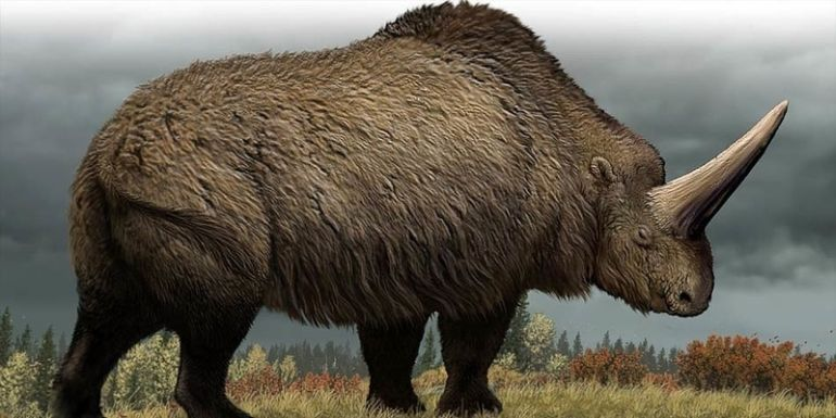 Siberian Unicorn Roamed The Earth 29,000 Years Ago, Study Reveals-3