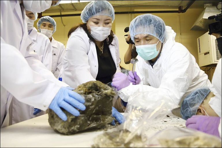 South Korean Scientists To De-Extinct Prehistoric Cave Lion-3