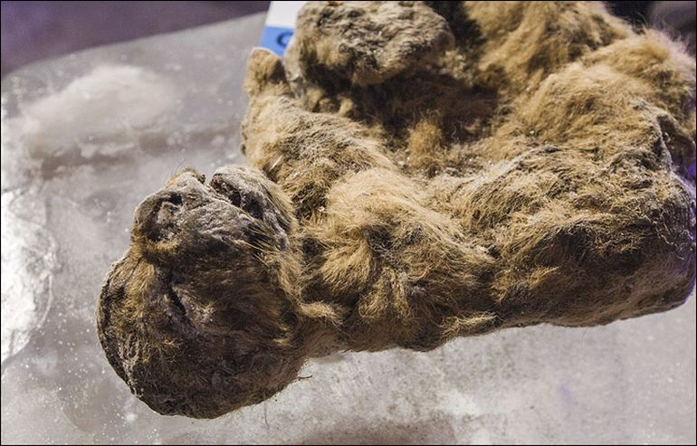 South Korean Scientists To De-Extinct Prehistoric Cave Lion-9
