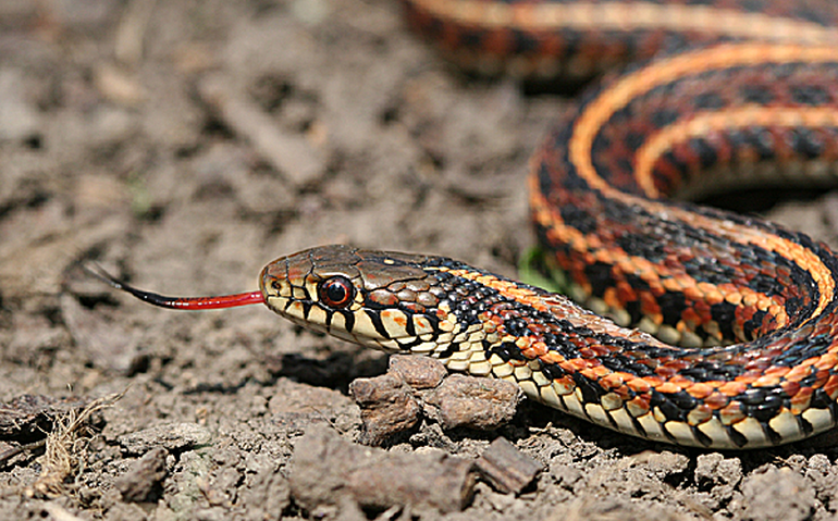 Universal Antivemon Could Neutralize Venom Of 28 Different Snakes-2