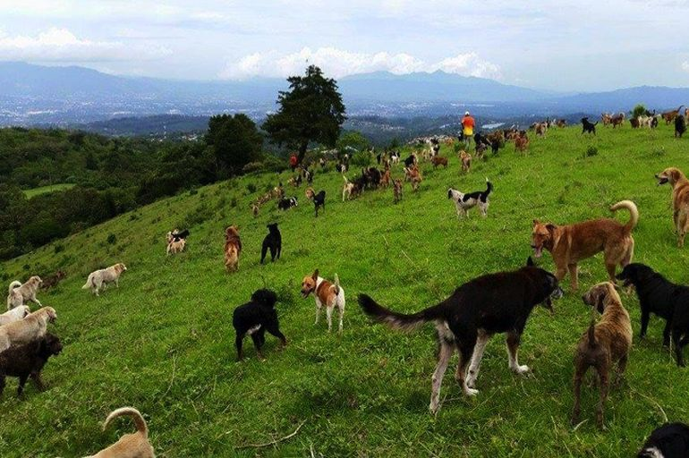 This Tiny Haven In Costa Rica Is Home To 900 Adoptable Dogs-2
