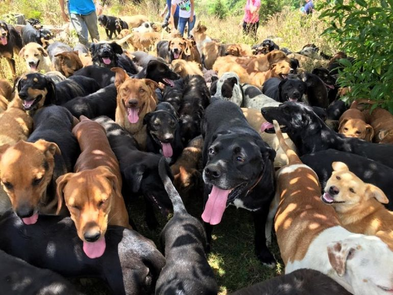 This Tiny Haven In Costa Rica Is Home To 900 Adoptable Dogs-3