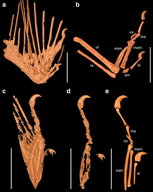 99-Million-Year-Old Dinosaur Wings With Feathers Discovered-2