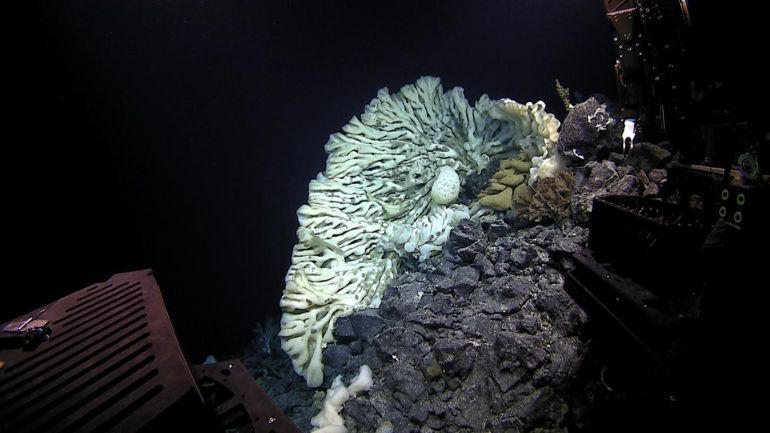 Centuries-Old Sea Sponge As Big As A Minivan Found In Hawaii-2