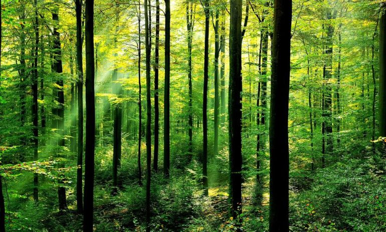 Uttar Pradesh In India To Plant 50 Million Trees In A Single Day-1