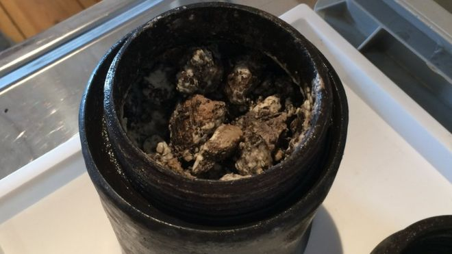 340-year-old cheese found under the ocean has a surprisingly 'pleasant' smell-8